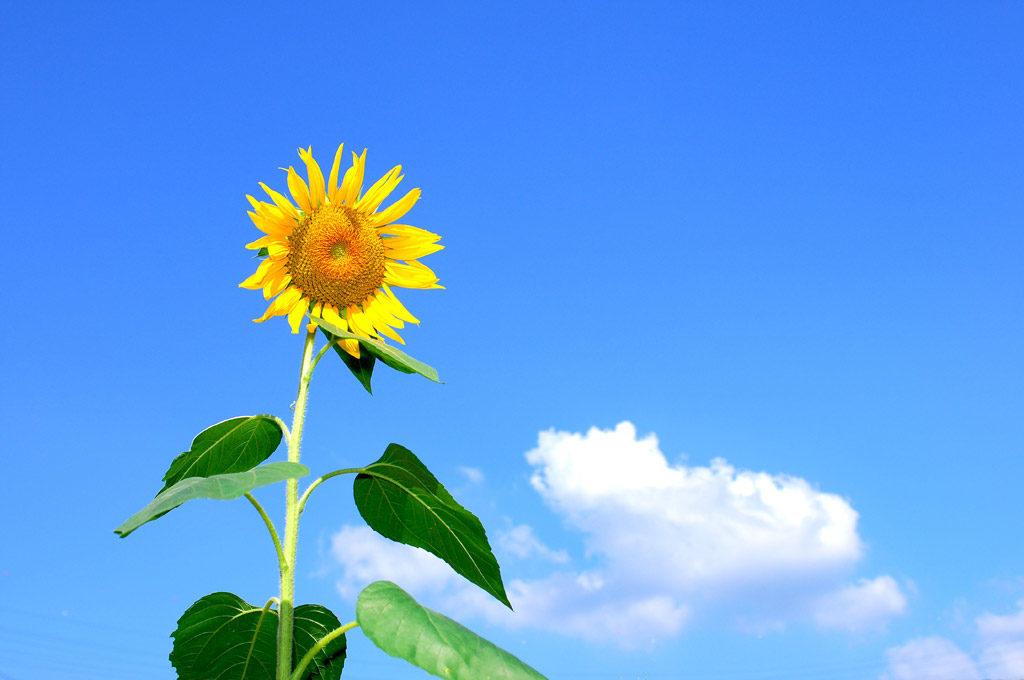 【汗対策】夏も、冬も汗をかく、多汗症気質の私が汗対策に使っているのはこれ