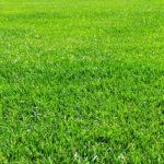 隣の芝生は青い。自分よりイケてる「文章」や「デザイン」もろもろ